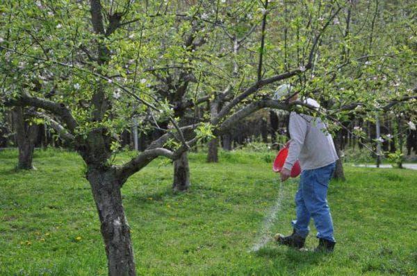 весенние подкормки для яблони