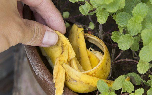 банановая подкормка