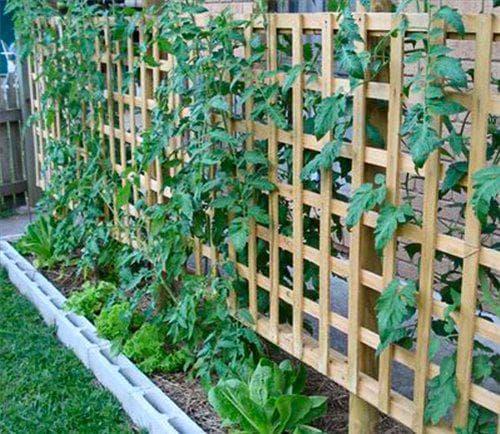 шпалеры для подвязки помидор в теплице