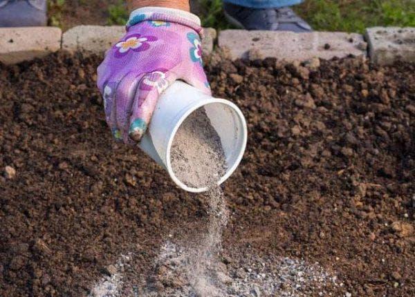 применение золы на огороде