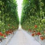 новые способы выращивания рассады томатов без земли