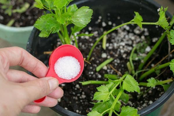 соль в саду