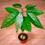как посадить баклажаны в открытый грунт