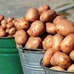 температура почвы для посадки картофеля