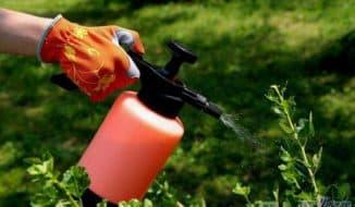 сода против мучнистой росы на смородине