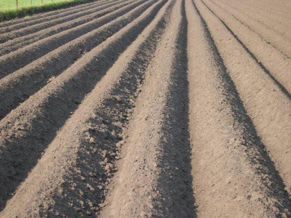 подготовка почвы для картофеля