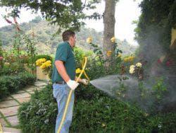 опрыскивание сада смородины