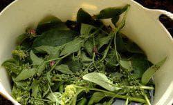настой для овощных культур