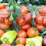болезни помидоров в теплице и их лечение