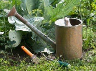 чем поливать капусту для хорошего урожая
