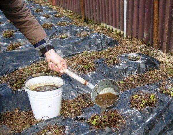 удобрение клубники в саду