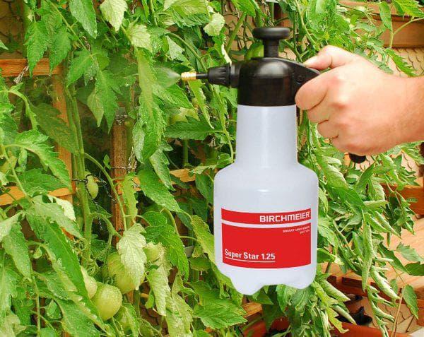 Народные средства от тли на помидорах