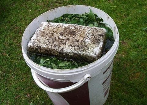 травяной настой для подкормки огурцов