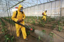 общая агротехническая профилактика