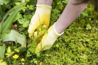 борьба с мокрицей на огороде