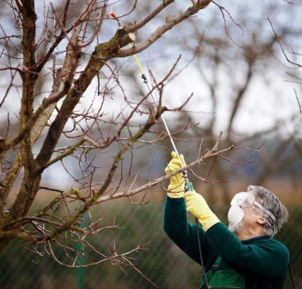 Чем опрыскивать деревья от тли народными средствами — Bexhoevede.info