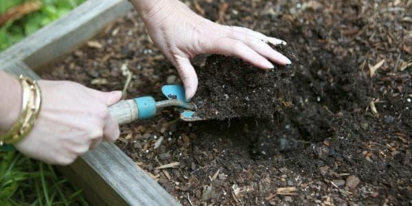 обработка почвы перед посадкой капусты