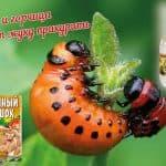 Как выбрать самое эффективное средство от колорадского жука