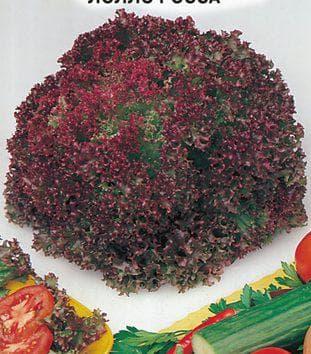 листовой салат Лолло Росса