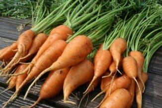 чем полить морковь чтобы она была сладкой