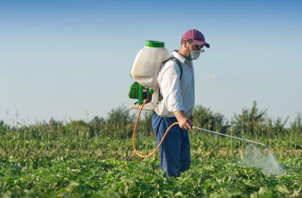 Инсектицид Наповал отрава от колорадского жука инструкция по применению и отзывы