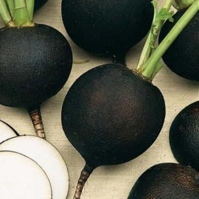 редька зимняя круглая черная