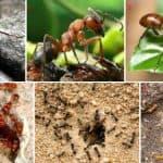 Список народных средств от муравьев в огороде