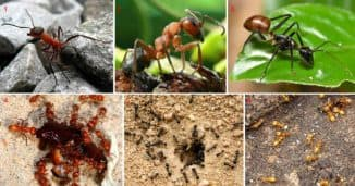 как убрать муравьев с огорода народными средствами