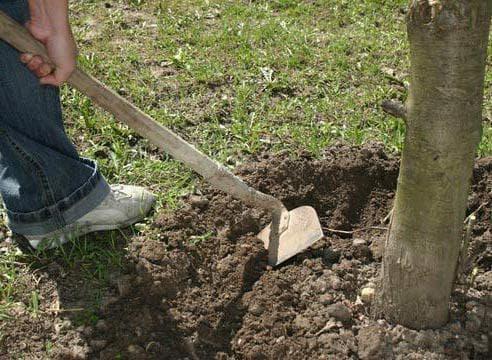рыхление почвы в прикорневой области