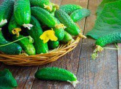 зеленка для огурцов как удобрение