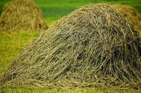 бобовое сено