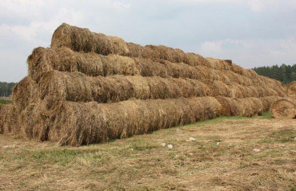злаковое сено