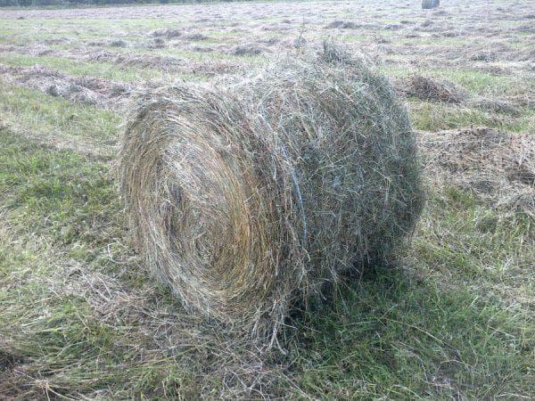 разнотравное сено