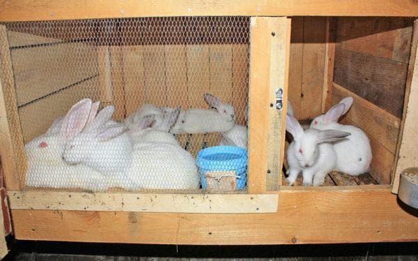 перемещение кролика в клетке