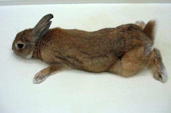 различные травмы кролика