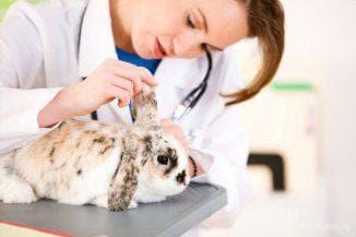 уколы кроликов вакциной ветеринаром