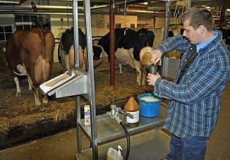 глина для вымени коровы