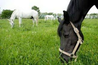 выгул лошадей