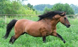 вятская порода лошадей в поле