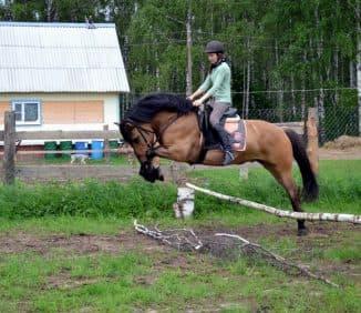 габариты вятская порода лошадей
