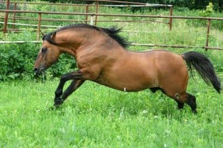 содержание вятская порода лошадей