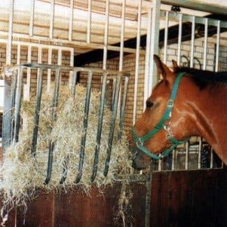 кормление лошадей грубыми кормами