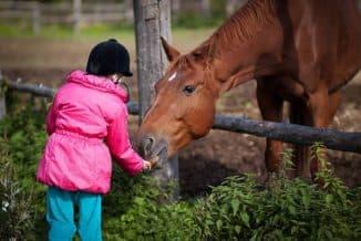 кормление лошади