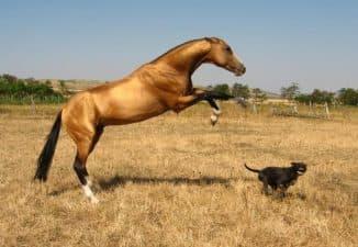 характеристики лошади