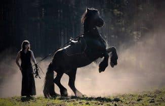 кормление чёрной лошади