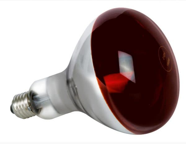 лампы накаливания для курятника