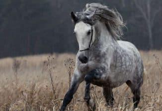 содержание орловской породы лошади