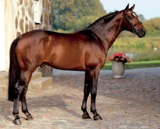 красивая ганноверская лошадь