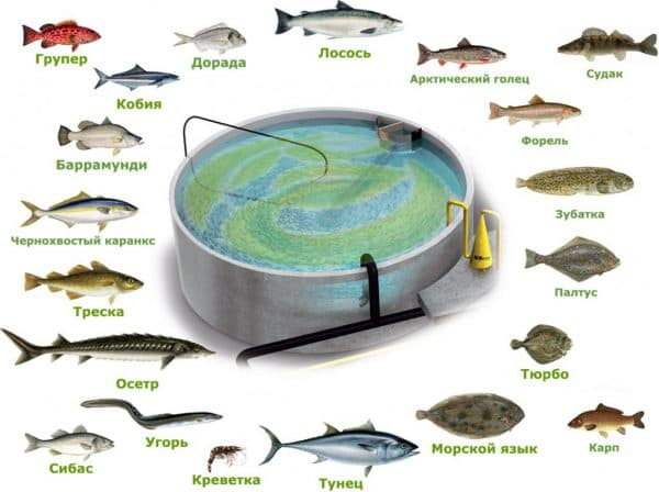 Оборудование для разведения рыбы в домашних условиях