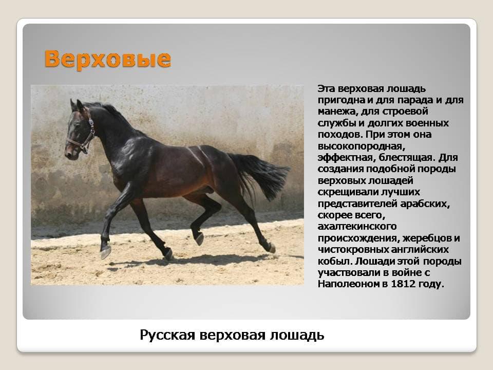 застелить картинки с описанием пород лошадей пухлых губ достигается